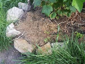 Mulchen Mit Grasschnitt : mulchen matznergarten ~ Lizthompson.info Haus und Dekorationen