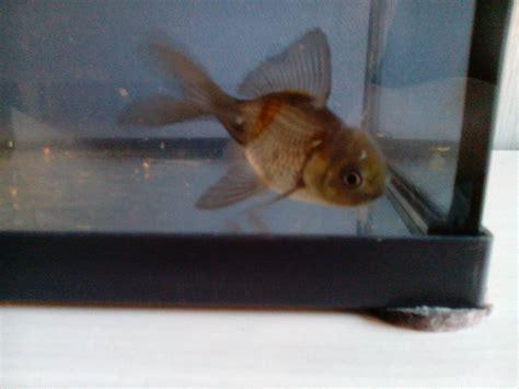 quel aquarium pour poisson 28 images quel poissons pour mon aquarium de 54 litres aquarium