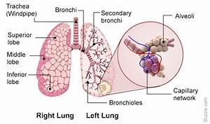 Asthma  U0026 Copd  Chronic Obstructive Pulmonary Disease