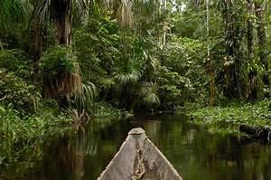 Yasuni Park in Ecuador Has Biodiversity | Travel | Smithsonian