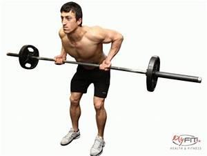 Bicep Brachii Exercises | Bicep Anatomy and Training