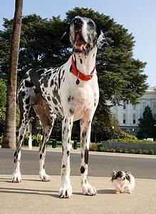 Classics: Tallest dog meets shortest dog | Guinness World ...