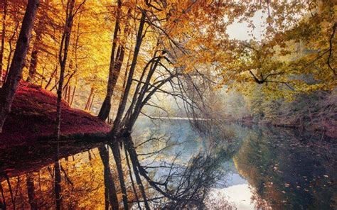 nature landscape fall trees yellow red leaves mist