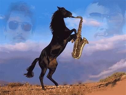 Horse Saxophone Playing October Far
