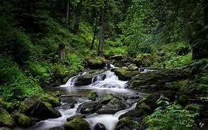 Forest, River, Hd, Wallpaper