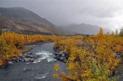 fall foliage   dempster highway