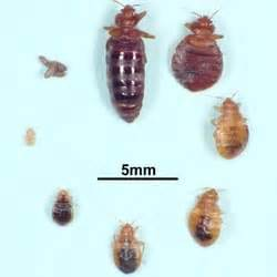 standard pest solutions 10 reviews pest control 1932 With bed bugs san francisco