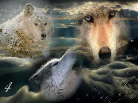 fonds d 233 cran animaux gt fonds d 233 cran loups loups powaa par aurore4444 hebus