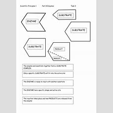 Ks4 Enzymes By Labsalom  Teaching Resources Tes