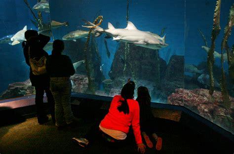 Norwalk Aquarium, Stamford Dance Festival Among New