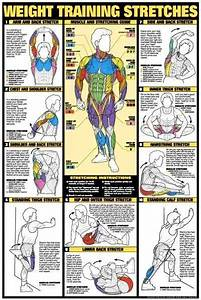 Bodybuilding Workout Diagrams