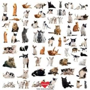 breeds of cats breeds of domesticated cats clanimal