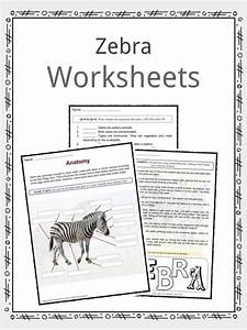 essay of animal farm essay animal farm george orwell essay animal