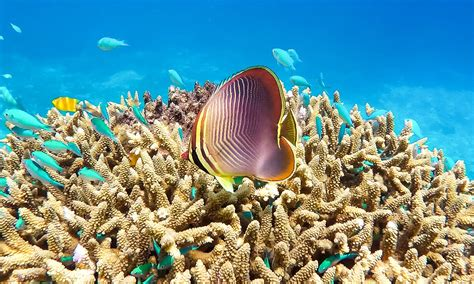 Cairns - gateway to the Great Barrier Reef - Great Barrier Reef diving - the gateway to the reef ...