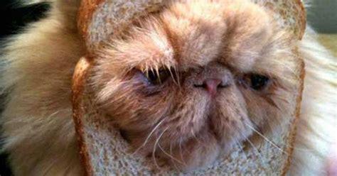 bread cats pictured bizarre website showcases