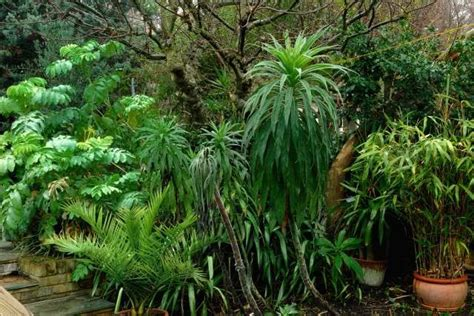 tropical looking plants for zone 6 17 best images about tropical look in zone 6 7 on pinterest gardens garden plants and tropical