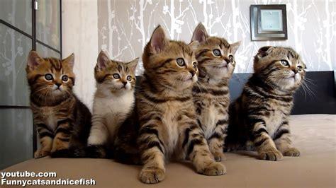 funny cats choir dancing chorus   kittens youtube