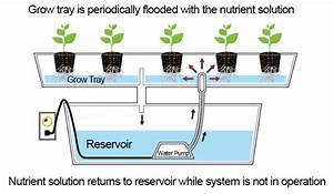 Hydroponic Growing Techniques