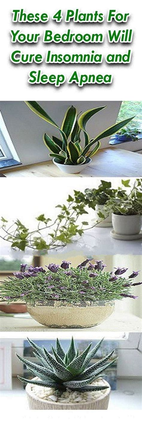 Bedroom Plants For Insomnia by These 4 Plants For Your Bedroom Will Cure Insomnia And