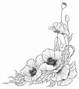 line-drawing-poppy-flower-1.jpg (1795×2048) | +Tattoos ...