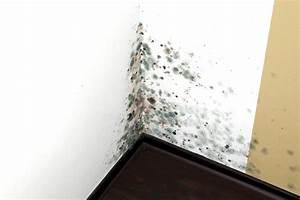 Keller Undicht Was Tun : so bek mpfen sie effizient feuchtigkeit bei der ~ Michelbontemps.com Haus und Dekorationen
