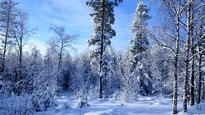 Snow Forest Winter Much Widescreen Resolutions
