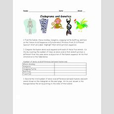 Cladograms And Genetics 10th  Higher Ed Worksheet  Lesson Planet