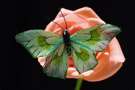 what colors are birds attracted to are butterflies attracted to color animals me