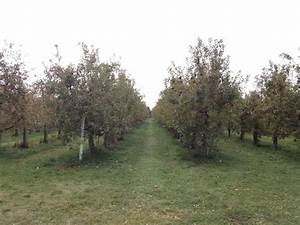 Apple orchard - Picture of Emma Krumbee's Restaurant ...