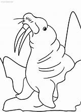 Coloring Walrus Pages Sheets Printable Template Shee Cool2bkids Colorings Getcolorings sketch template