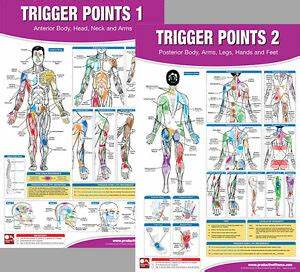 Trigger Points Professional Fitness Gym Physiotherapy Wall