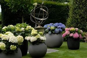 Sind Hortensien Winterhart : hortensien spektakul rer auftritt garantiert ~ Lizthompson.info Haus und Dekorationen