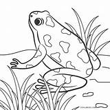 Frog Coloring Pages Print Printable Cool2bkids Template sketch template
