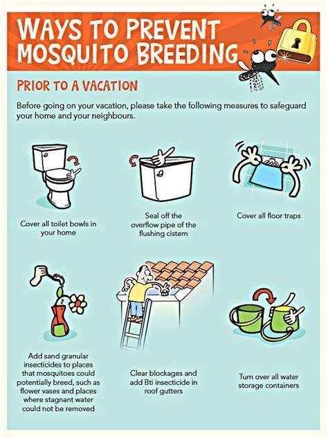 tips to prevent dengue indiatimes com