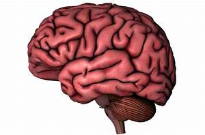 Brain Outline Image - ClipArt Best
