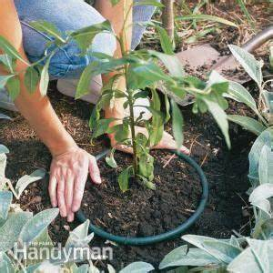 Plants, Root system and Gardens on Pinterest