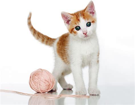 mehr als zeckenschutz fuer katzen geeignete mittel