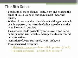 The sense of touch, pain & temperature