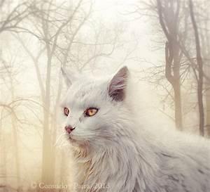 Amber eyes... by Aeternum-Art on DeviantArt