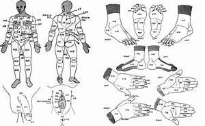 Human Surface Anatomy Labeling System - Nyu Version
