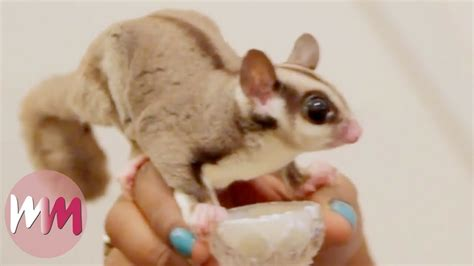 top 10 weirdly pets you should own