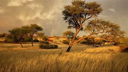 Africa Landscape Grass Namibia Nature Tree African