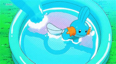 mudkip torchic gif mudkip torchic water discover