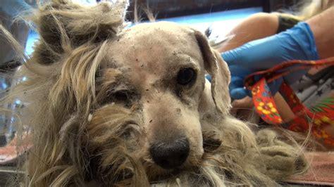 chien abandonne avec une fourrure dans  etat