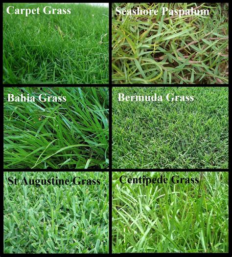 lawn grass types decor references