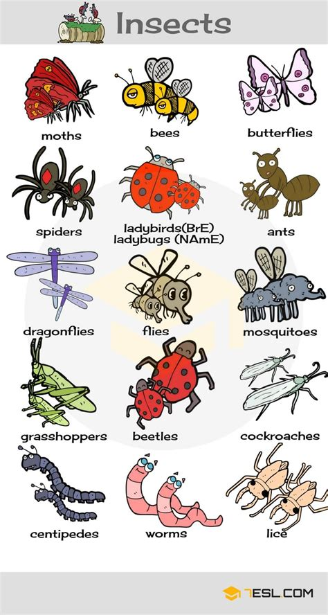Insects Vocabulary In English  Learn Insect Names  7 E S L