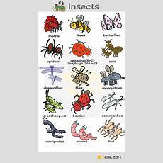 Garden Insects Name  Garden Ftempo