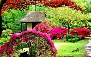 Flower Garden Wallpaper Free Download