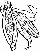 Corn Coloring Template Stalk Indian Healthy Vegetables Preschool Vegetable Clipart Animal Ears Fruits Fruit Clipartmag Clip sketch template