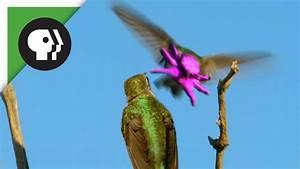 Hummingbirds face resembles baby octopus 1funnycom for Face of a hummingbird resembles a baby octopus